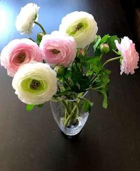 Ranunkel - Strauß pink/weiß